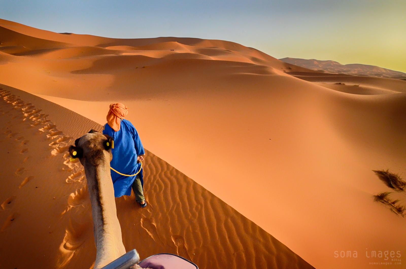 Camels, red sand dunes, Erg Chebbi, Sahara Desert, Morocco