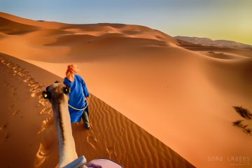Camels, red sand dunes, Erg Chebbi, Sahara Desert, Morocco, tours from marrakech to zagora