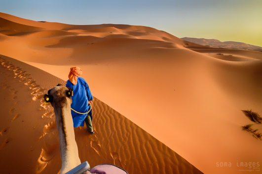 Camels, red sand dunes, Erg Chebbi, Sahara Desert, Morocco, tours from marrakech to zagora